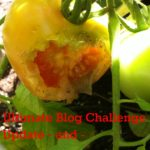 UBC Update And Who Ate My Tomato?